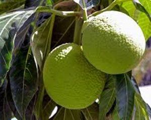 Frutipan fruta | frutas con f