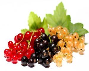Grosella   frutas con g